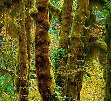 Hall of Mosses by RavenFalls