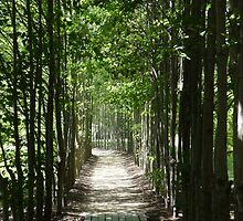 Peaceful Path by Amanda Yetman
