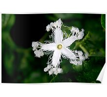 Flower white  Poster
