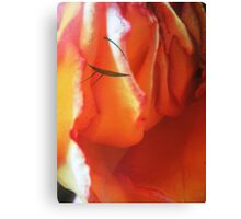 Ledy in red - woman face -natural world -red rose Canvas Print