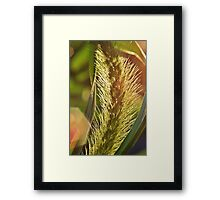 Backyard Flare Framed Print