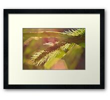 Backyard Flare 2 Framed Print