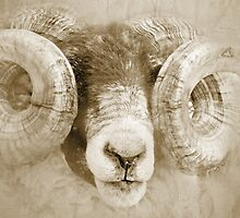 Ram With Atitude by beatrice11
