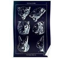 A Handbook Of Ornament With Three Hundred Plates Franz Sales Meyer 1896 0093 Natural Forms Panther Head Inverted Poster