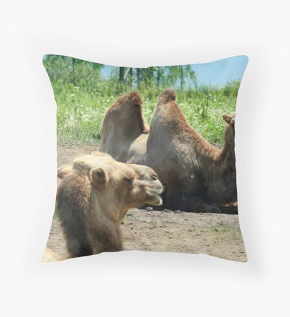 Bactrian Camels Throw Pillow