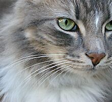 Grumpy Grey Cat by Amy Rawlings