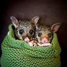 """Tinka & Scarlett"" Brushtail Possums by Amber  Williams"