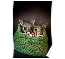 """""""Tinka & Scarlett"""" Brushtail Possums Poster"""