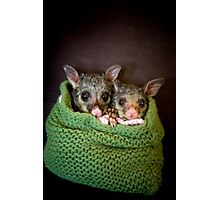 """Tinka & Scarlett"" Brushtail Possums Photographic Print"