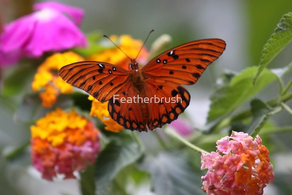 Orange anyone by Featherbrush