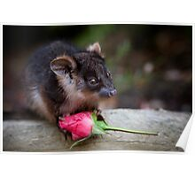 """Lilac"" Ringtail Possum Poster"
