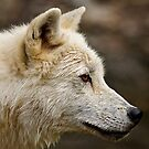 Challange Avatar, Arctic Wolf by Michael Cummings