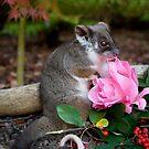 """""""Sachi"""" Ringtail Possum by Amber  Williams"""