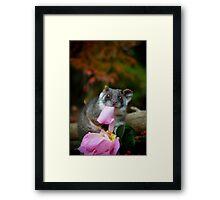 """""""Sachi"""" Ringtail Possum Framed Print"""