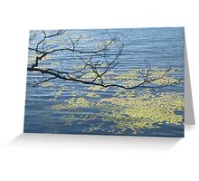zen lily pads Greeting Card