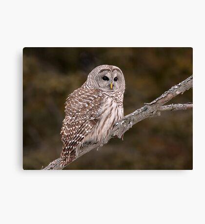 Barred Diagonally / Barred Owl Canvas Print