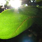 Sunburst in Green - Sunrise through a Leaf by BlueMoonRose