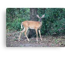 Backyard Deer Canvas Print