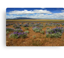 Springtime In Honey Lake Valley Canvas Print
