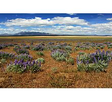 Springtime In Honey Lake Valley Photographic Print