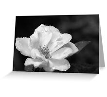 Rose and Water Droplets in Black and White Greeting Card