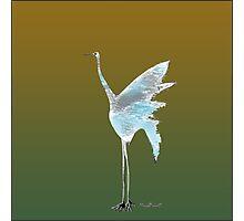 Crane Sketch Photographic Print