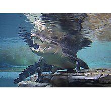 Crocodile Smile Photographic Print