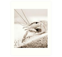 The Crayfish. Art Print