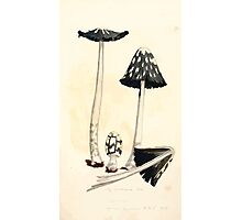 Coloured figures of English fungi or mushrooms James Sowerby 1809 0449 Photographic Print