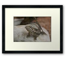 Here a little dragon! Cranbourne, Vic. Framed Print