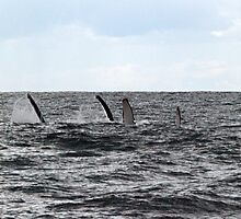 Finny fun with humpbacks by Odille Esmonde-Morgan