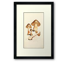 Coloured figures of English fungi or mushrooms James Sowerby 1809 0369 Framed Print