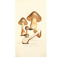 Coloured figures of English fungi or mushrooms James Sowerby 1809 0369 Photographic Print