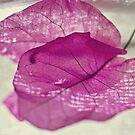 leaf study by oddoutlet