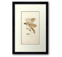 Coloured figures of English fungi or mushrooms James Sowerby 1809 0515 Framed Print