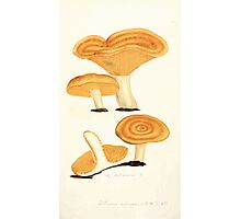 Coloured figures of English fungi or mushrooms James Sowerby 1809 0513 Photographic Print