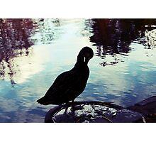 Lomo duck! Photographic Print
