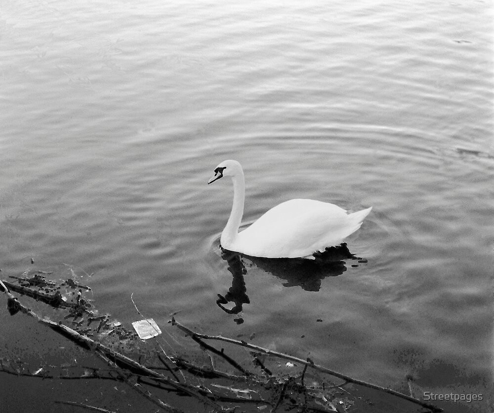 White solitary Swan. by Streetpages