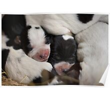 Puppy Pile Up Poster