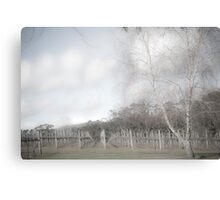 Winter vineyard 2 Canvas Print