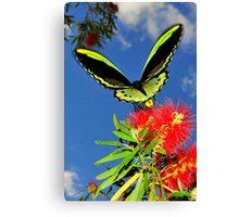 butterfly on bottle brush flower Canvas Print