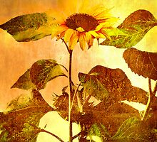 Let the Sunshine In by Catherine Hamilton-Veal  ©