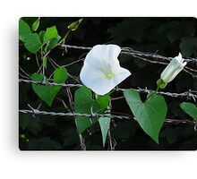 Bouquet on barbed wire Canvas Print