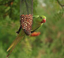 Green Parakeet by Deborah Durrant