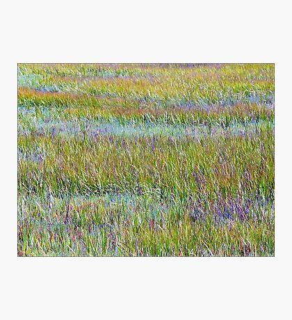 A Sea of Grasses: Waves of Color Photographic Print
