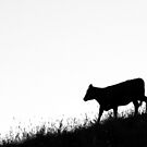 25.7.2015: Cow on Hilly Pasture III by Petri Volanen