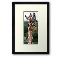 Giraffe head Framed Print