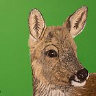 British Wildlife Set 1 - Deer by Elizabeth Hibberd
