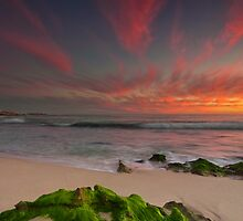 Natures Colour Palette by Jonathan Stacey