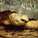 Turtle Strikes a Pose by mercale